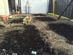 2年目の庭.jpg