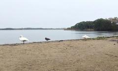 ウトナイ湖.jpg