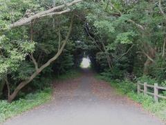 サンポウ木のトンネル.jpg