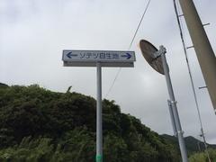 ソテツ自生地.jpg