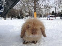 ラヴィ雪の公園2013年1月14日1.jpg