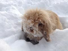 ラヴィ雪の公園2013年1月14日2.jpg