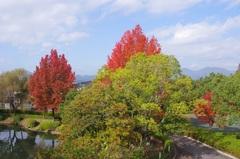 亀山市東野公園紅葉と鈴鹿山脈.jpg