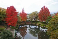 亀山市森野公園紅葉.jpg