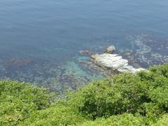 佐田岬直下の海透明度.jpg