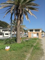 勝浦海岸駐車場.jpg