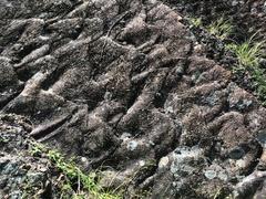 化石漣痕2.jpg