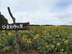 北竜町ひまわりの里.jpg