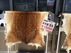 原生花園エゾシカ夏毛15000円.jpg