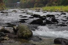 塩原温泉郷を流れる清流、箒川(ほうきがわ).jpg