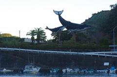 太地町クジラ.jpg