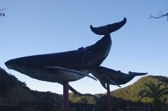 太地町クジラ2.jpg