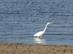 小川原湖鳥.jpg