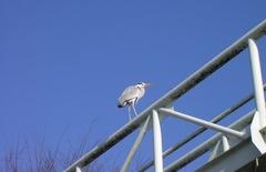 岡山の鳥1.jpg