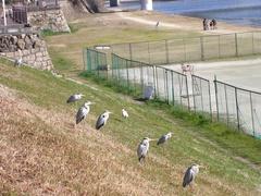 岡山の鳥2.jpg