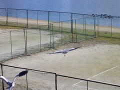 岡山の鳥4.jpg