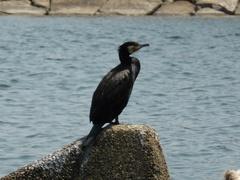 岡山の鳥6.jpg
