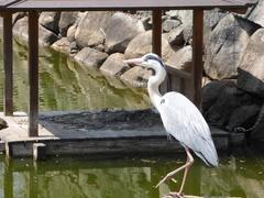 岡山の鳥8.jpg