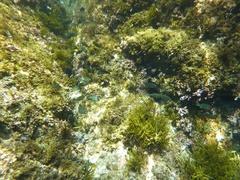 岩美の海の中.jpg