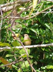 日の岬鳥.jpg