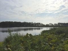 朝の尾岱沼4.jpg