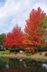 森野公園紅葉2.jpg