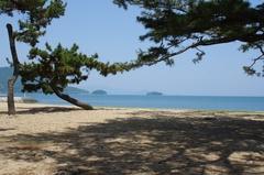 津田の松原と海岸.jpg