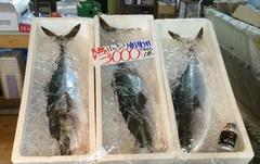 浜田しまねおさかなセンターこぶり3000円.jpg