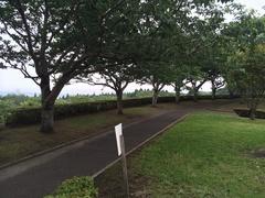 瀬戸公園駐車場の海方向.jpg