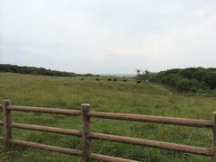 牧崎風の公園.jpg