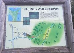 猿ケ森ヒバの埋没林.jpg