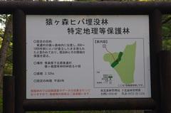 猿ケ森ヒバの埋没林2.jpg