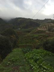 玉露の里茶畑.jpg