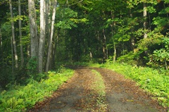 道なき道2.jpg