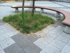 道の駅 はわいベンチと芝生.jpg