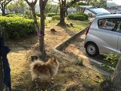 道の駅 ビオスおおがた駐車場カール.jpg