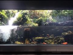 道の駅やよい淡水魚水族館水槽.jpg