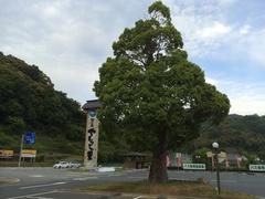 道の駅津島いい木です.jpg