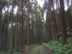 金峰山手入れされた森林.jpg