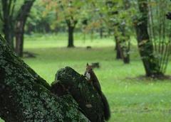 鈴蘭公園リス1.jpg
