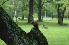 鈴蘭公園リス2.jpg