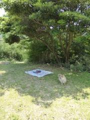 間越海岸芝生で敷物しいて休憩.jpg