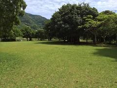 須の川公園この木なんの木.jpg