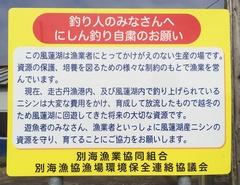 風蓮湖走古丹漁港ニシン釣り.jpg