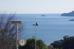 高塚山展望台からトンビと海.jpg